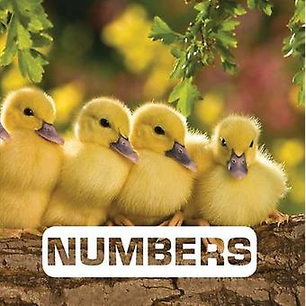 Numbers by Judith Nouvian - 9780544512658 Book
