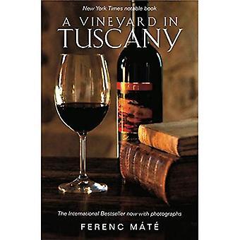 Ein Weingut in der Toskana: illustrierte Ausgabe