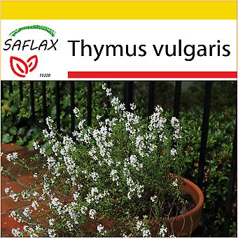Saflax - Potting Set - 200 seeds - Common Thyme - Thym commun - Timo comune - Tomillo - Echter Thymian