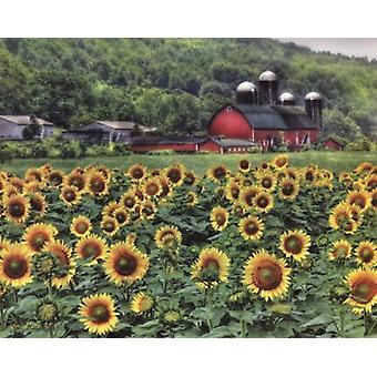 Sunflower Farm Poster Print by Lori Deiter (20 x 16)