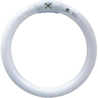 UV ring light Swissinno Lampe UVA 22 W Suitable for Swissinno 1 pc(s)