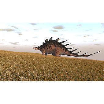 Kentrosaurus walking across a grassy field Poster Print