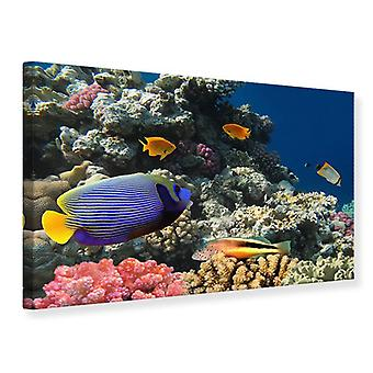 Canvas Print The Aquarium