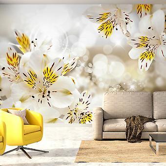 Wallpaper - Sunny Alstroemeria