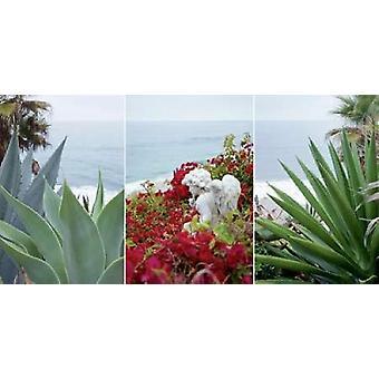 Laguna Coast - 1 Poster Print by Alan Blaustein