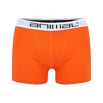 Animal Block Underwear