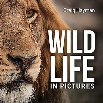 Wildlife In Pictures by Craig Hayman - 9781925546217 Book