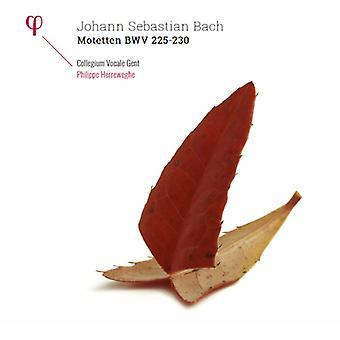 Bach / Herreweghe, Philippe / Collegium Vocale Gent - Bach: Motetten Bwv 225-230 [Vinyl] USA importerer
