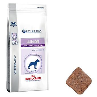 Royal Canin Pediatric Junior Giant Canine (Honden , Voeding , Dierenvoeding , Droogvoer)