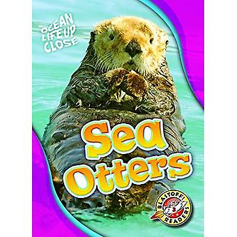 Sea Otters (Ocean Life Up Close)