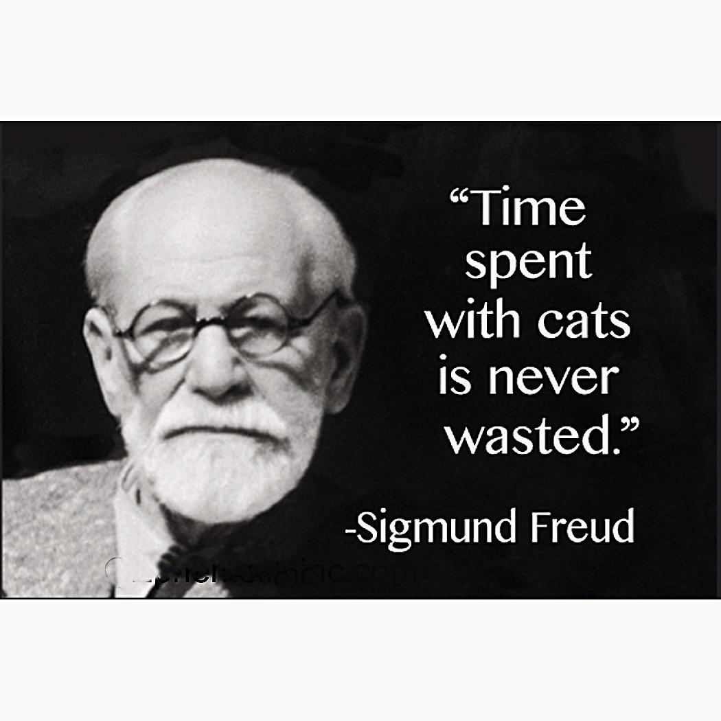 Time Spent With Cats Is Never Wasted (Sigmund Freud) funny fridge magnet     (ep)