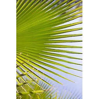 Palm Branch Poster Print by Karyn Millet