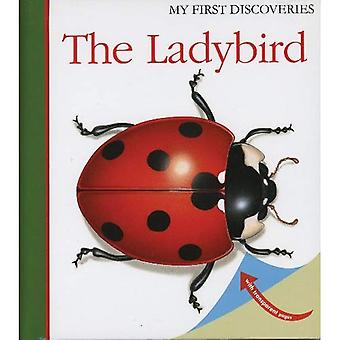 The Ladybird (My First Discoveries)