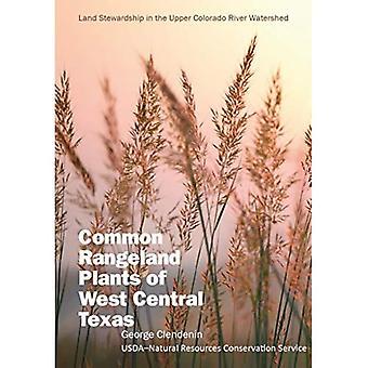 Plantes communes de parcours du centre ouest du Texas