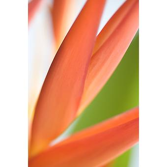 Absttract Close-Up View Of Heliconia PosterPrint