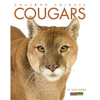 Cougars (Amazing Animals (Creative Education Paperback))