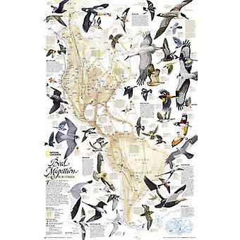 Bird Migration - Western Hemisphere by National Geographic Maps - 9781