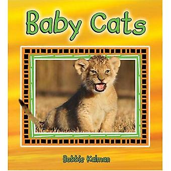 Baby Cats (It's Fun to Learn about Baby Animals)