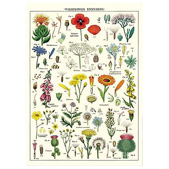Cavallini Wildflowers Wrapping Paper