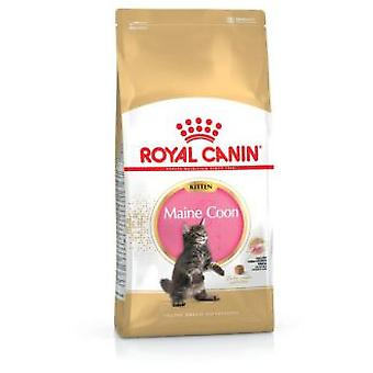 Royal Canin Kitten Maine Coon 36 (Chats , Nourriture , Croquettes)