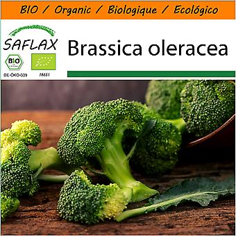Saflax - Garden in the Bag - 100 seeds - Organic - Broccoli - Calabrese - BIO - Brocoli - Calabrese - BIO - Broccolo - Calabrese - Ecológico - Brócoli - Calabrese - Broccoli - Calabrese