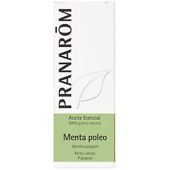 Pranarom Essential Oil Mint Oil