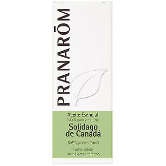 Pranarom Essential Oil Solidago Canada