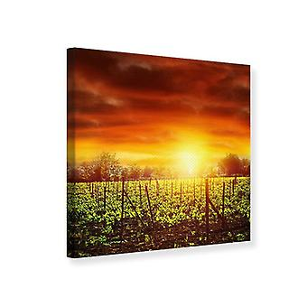 Canvas Print The Vineyard At Sunset